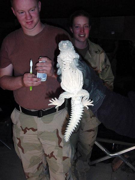 Benge & Lizard1.jpg