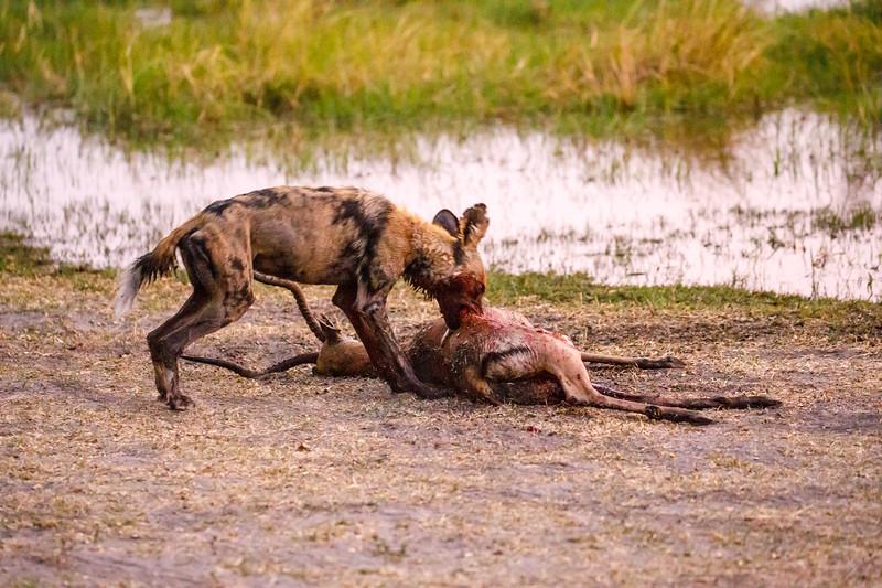 Botswana_0818_PSokol-1704.jpg