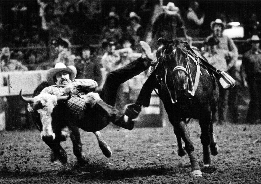 . Foster Of Tomball, Texas, Was Still In The Air As He Grabbed This Unwilling Steer By The Horns Monday The well-trained horse brought his rider close to the running target, then moved out of the way during the steer wrestling event at the Stock Show. 1981. Lyn Alweis, The Denver Post  Credit: Denver Post