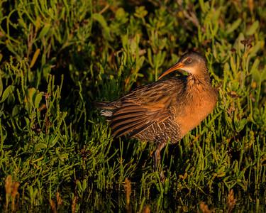 Audubon - Dec. 2014