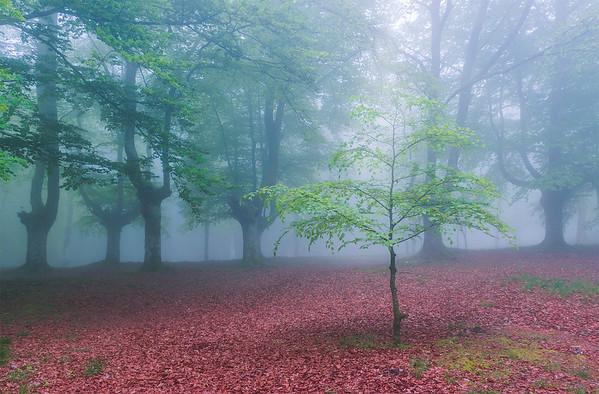 Entre ramas y troncos