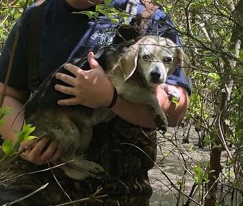 5/25/19 Dog Rescue