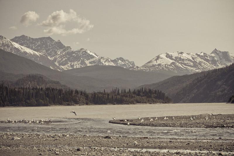 Alaska Copper River-8225.jpg