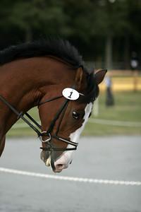 070930 USEA Horse Trial
