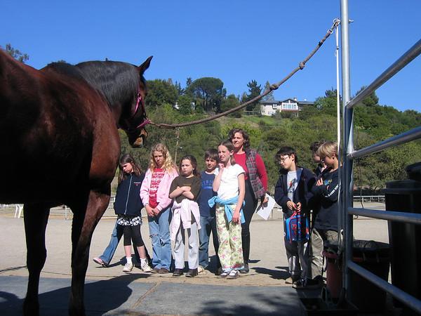 Horse Management - Fremont Hills 31Mar08