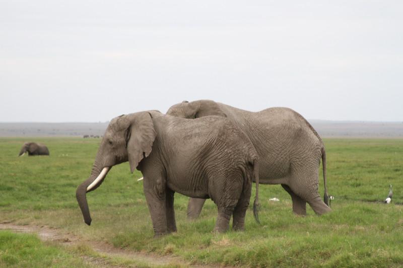 Kenya 2019 #2 1590.JPG