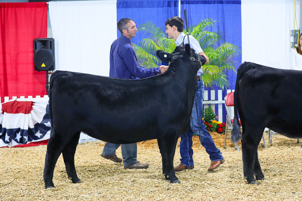 Bred And Owned Heifer Ring Shots