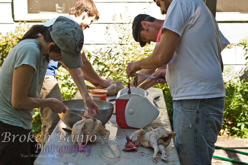 Chickenslaughterhigh_25.JPG