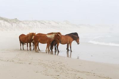 Wild Horses 2018