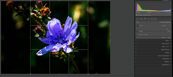 Custom portrait format Grid Overlay