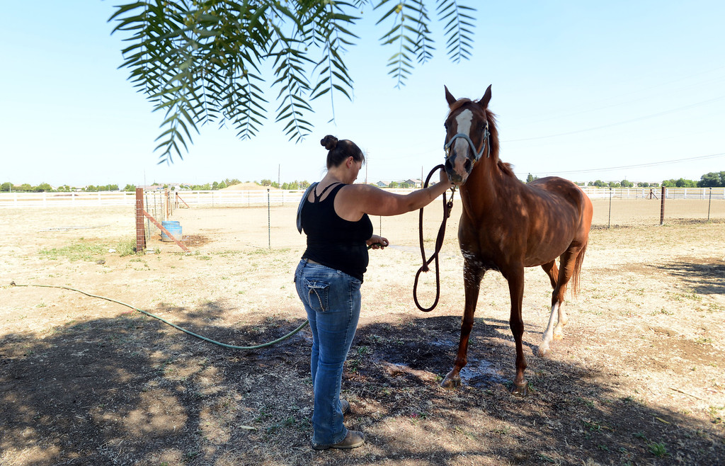 . Corinna Bledsoe talks to Jazmine as she tries to coax the the horse into the shade on her Brentwood, Calif., ranch on Wednesday, July 31, 2013.  (Susan Tripp Pollard/Bay Area News Group)
