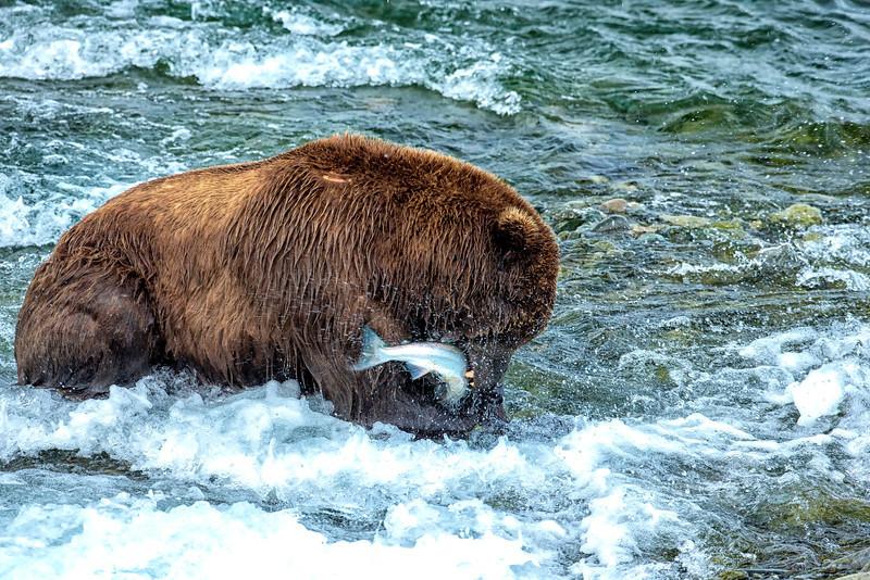 Alaska_2013_FH0T8889.jpg