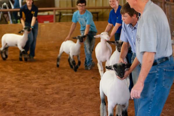 Verden Sheep and Goat Jackpot