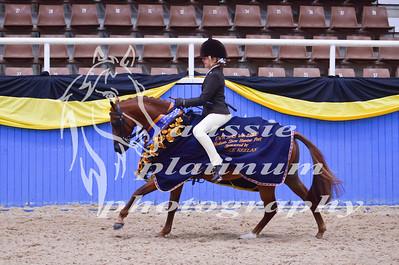 Class 4 Med Show Hunter Pony 12-13hh