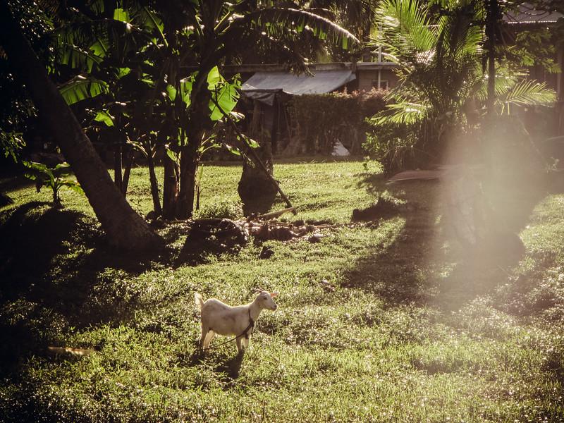 Rarotonga-Cook-Islands-2014-1.jpg