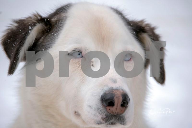 dog sled 29.jpg
