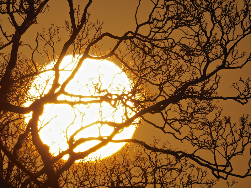 Sunset through trees 5th April 2021