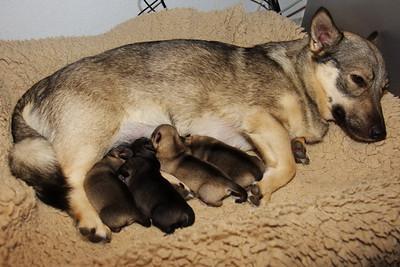 Pups 1 week - 11 september 2010