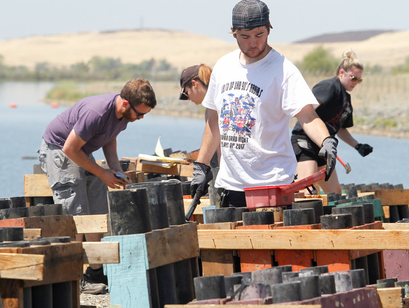 Spencer Bryant grabs some nails as he and the crew with Pyro Spectaculars assemble firework racks July 3, 2017 at the Thermalito Forebay in Oroville, California.  (Emily Bertolino -- Mercury-Register)