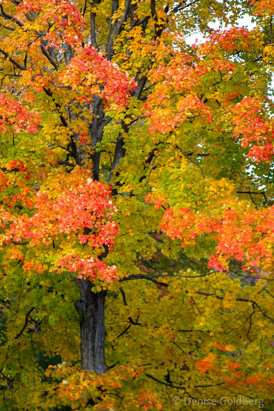 painted in autumn colors