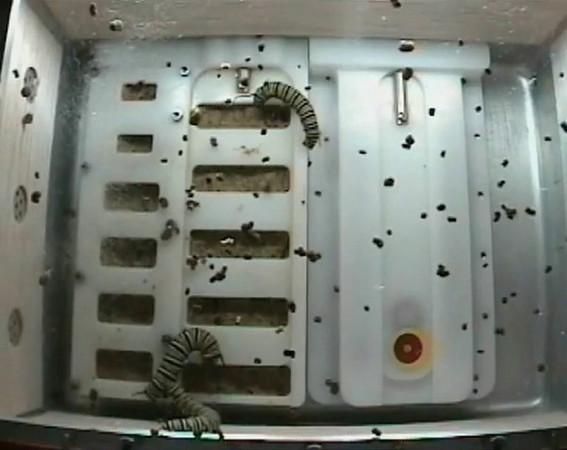 ISS-monarchs-20091121.m4v