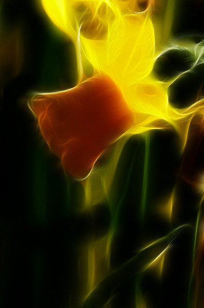 local_area_00980_glowing_daffodil-sm.jpg
