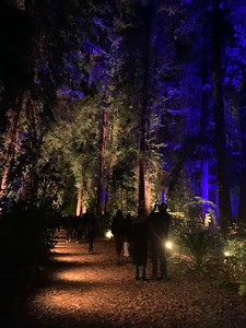 2020.01.03 Descanso Gardens - Enchanted Forest of Light
