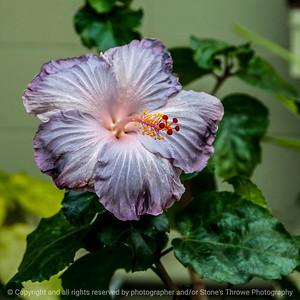 015-flower-dsm-07feb14-006-6508