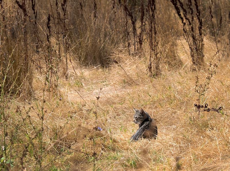 field cat2.jpg