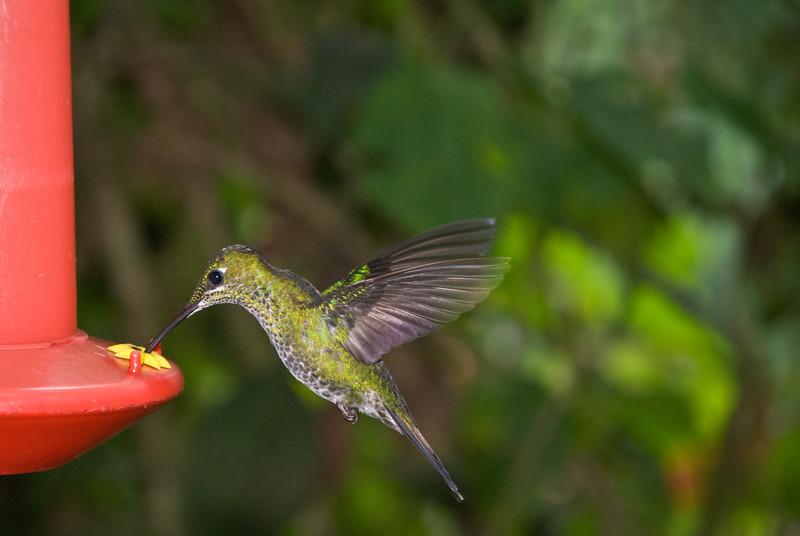 Costa Rica (160 of 104)