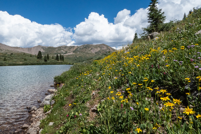 More Lake Ann & Wildflowers