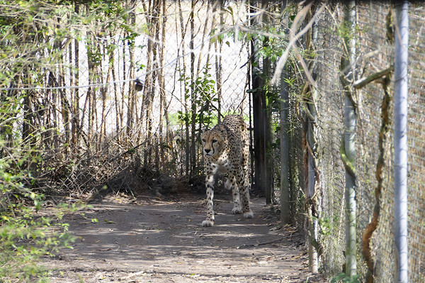 BR Zoo 2-7-2009