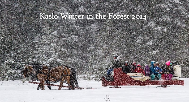 Kaslo Winter in the Forest 2014