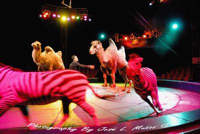 2014-04-12 Circo Hermanos Vazquez