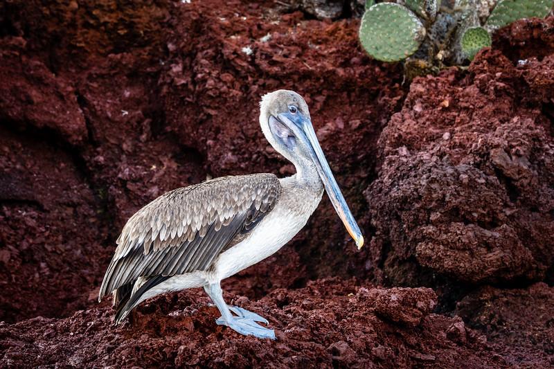 Galapagos-3470-2.jpg