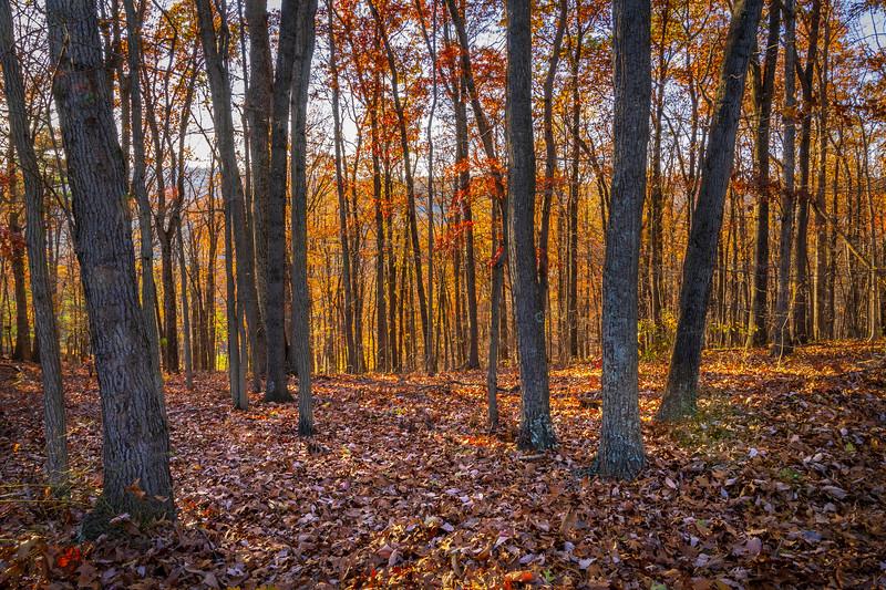 West Virginia Fall Colors Four.jpg