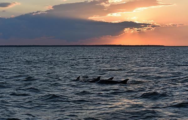 Jekyll Island Boat Tours Dolphin Daze Dolphin 06-18-20 7pm