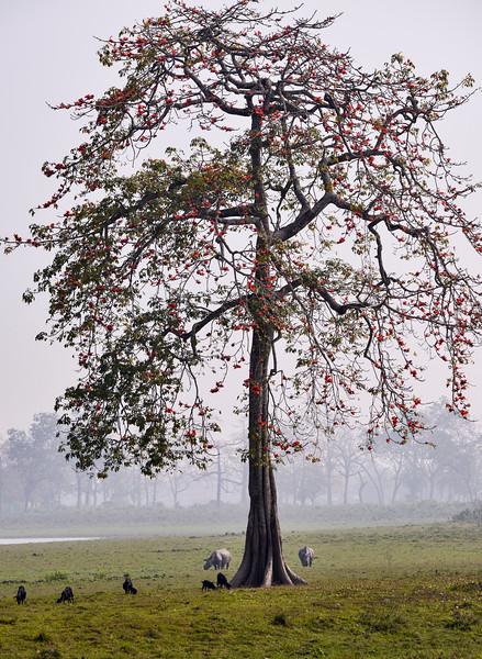 Tree-Cradle-of-life.jpg
