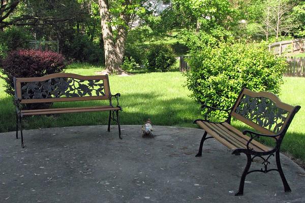 May 12, 2008:  The yard looks nice .  .  .