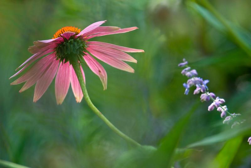flower1899.jpg
