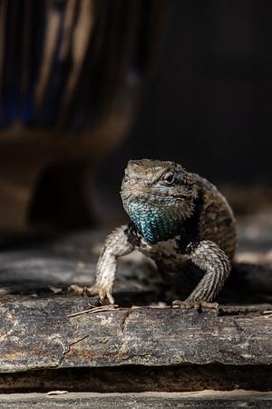 2021 Arizona Creatures