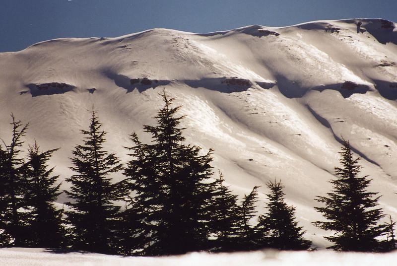 snowceders.jpg