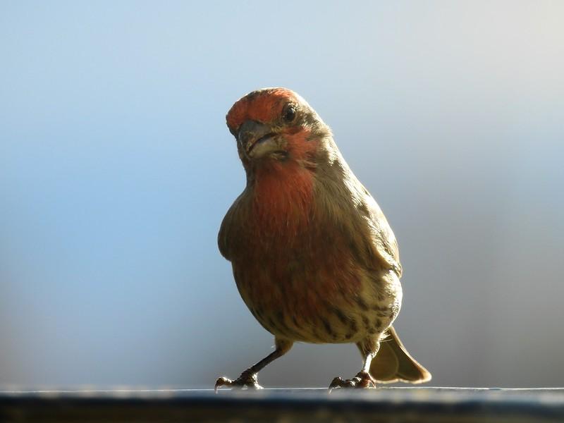 birds (191).JPG