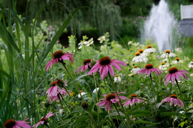 Sayen field of flowers.jpg