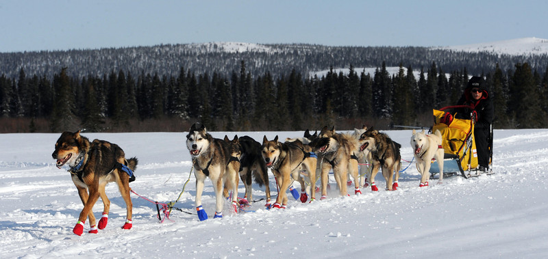 . Mitch Seavey begins the run from White Mountain to the finish in Nome, Alaska, Tuesday, March 12, 2013, during the Iditarod Trail Sled Dog Race. (AP Photo/The Anchorage Daily News, Bill Roth)