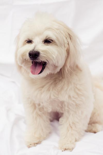 opal mike dogs (1 of 1)-69.jpg