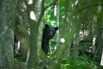Shenandoah National Park, Spring & Summer 2015