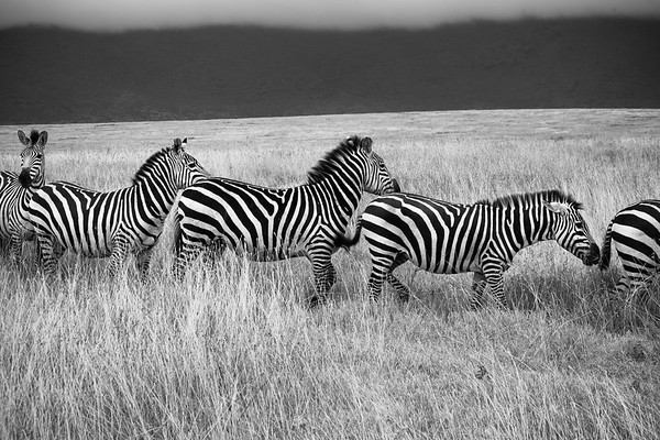 Black & White and Sepia-toned