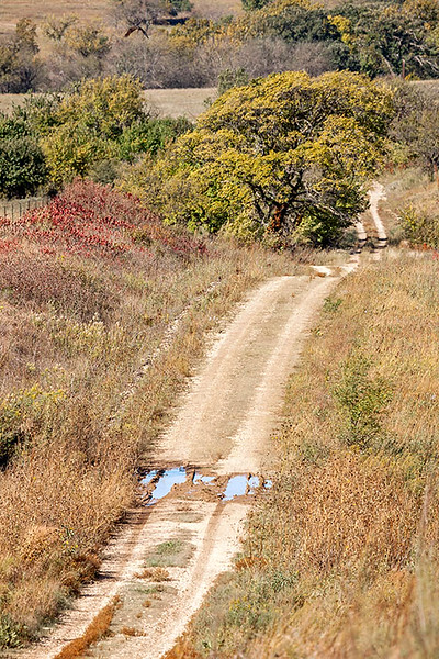 Coyne Creek Road, October