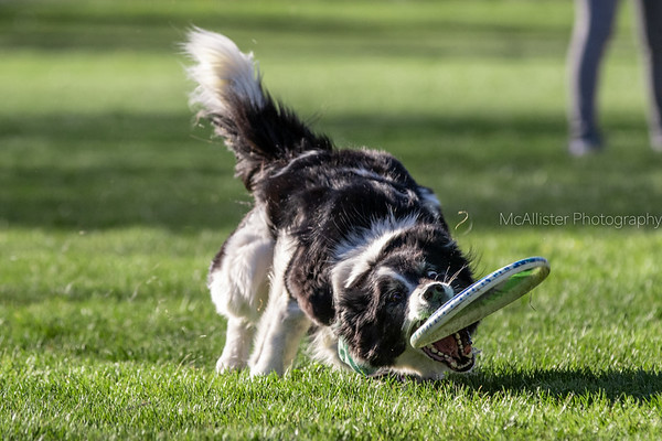 Toss and Fetch League